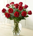 Rose Elegance - Premium Long Stem Red Roses From Ka'bloom, your flower shop in Sylvania, OH