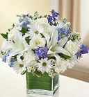 Healing Tears - Blue and White From Stellar, your flower shop in Sylvania, OH