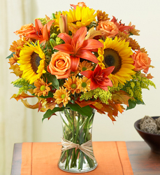 Fields of Europe for Fall From Stellar, your flower shop in Sylvania, OH