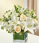 Healing Tears - All White From Stellar, your flower shop in Sylvania, OH