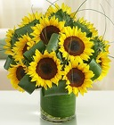 Sun-Sational Sunflowers From Stellar, your flower shop in Sylvania, OH