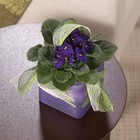African Violet Adventure From Stellar, your flower shop in Sylvania, OH
