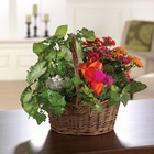 Kalanchoe Garden Basket From Stellar, your flower shop in Sylvania, OH