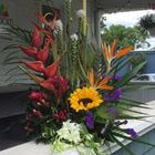 Sunrise Tropics From Stellar, your flower shop in Sylvania, OH