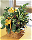 FTD A Bit Of Sunshine Basket From Stellar, your flower shop in Sylvania, OH