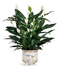 FTD Comfort Planter From Stellar, your flower shop in Sylvania, OH