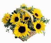 FTD Sunflower Basket From Stellar, your flower shop in Sylvania, OH