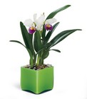 Irresistible Orchid Planter From Stellar, your flower shop in Sylvania, OH