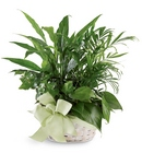 Woodland Greens Basket From Stellar, your flower shop in Sylvania, OH