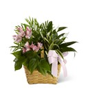The FTD Living Spirit(tm) Dishgarden From Stellar, your flower shop in Sylvania, OH