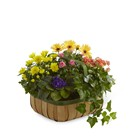 The FTD Gentle Blossoms(tm) Basket From Stellar, your flower shop in Sylvania, OH