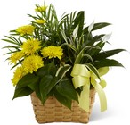 The FTD Loving Light Dishgarden From Stellar, your flower shop in Sylvania, OH